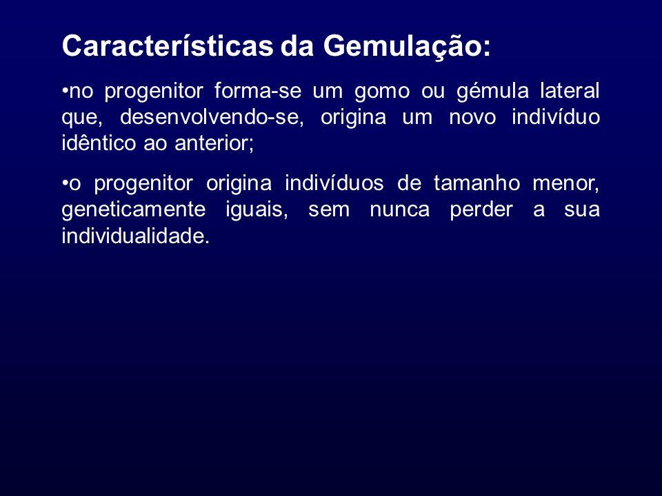 Características da Gemulação: no progenitor forma-se um gomo ou gémula lateral que, desenvolvendo-se, origina um novo indivíduo idêntico ao anterior;