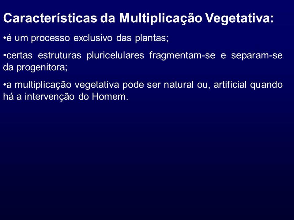 Características da Multiplicação Vegetativa: é um processo exclusivo das plantas; certas estruturas pluricelulares fragmentam-se e separam-se da proge