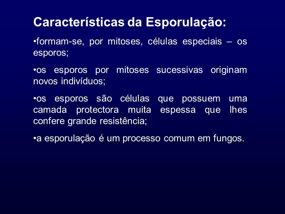 Características da Esporulação: formam-se, por mitoses, células especiais – os esporos; os esporos por mitoses sucessivas originam novos indivíduos; o