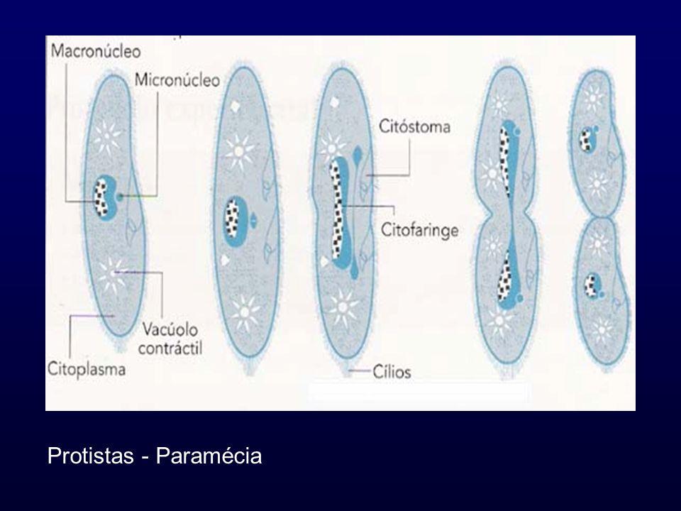 Características da Partenogénese: o indivíduo desenvolve-se a partir de um óvulo não fecundado.