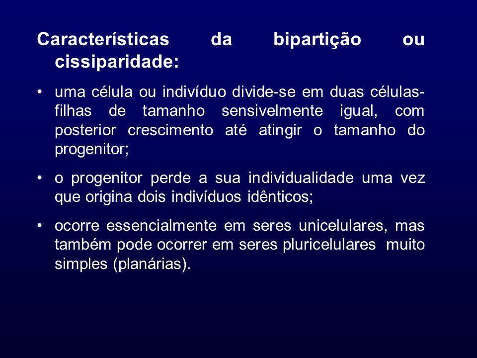 Características da bipartição ou cissiparidade: uma célula ou indivíduo divide-se em duas células- filhas de tamanho sensivelmente igual, com posterio