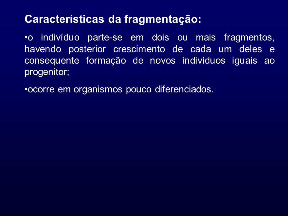 Características da fragmentação: o indivíduo parte-se em dois ou mais fragmentos, havendo posterior crescimento de cada um deles e consequente formaçã