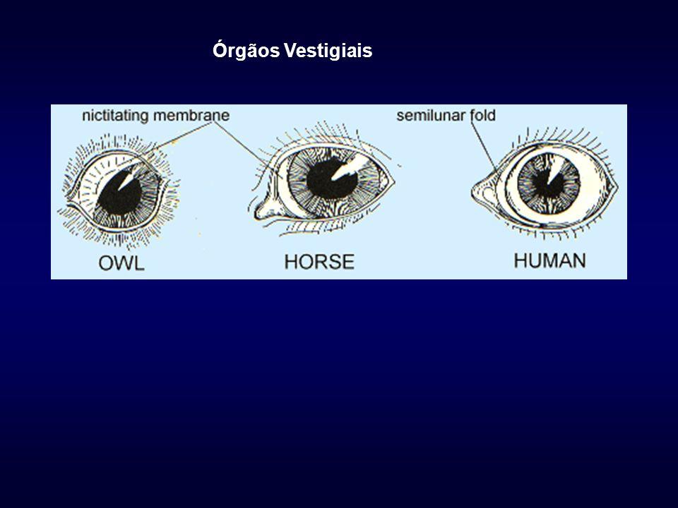 Órgãos Vestigiais