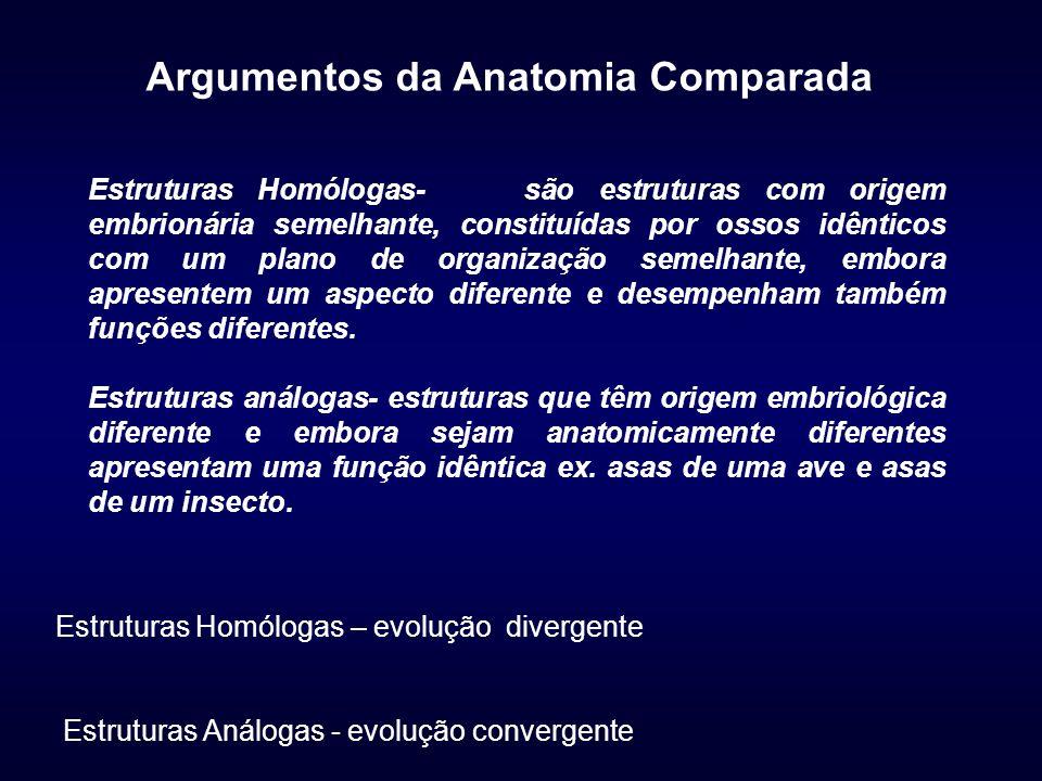 Argumentos da Anatomia Comparada Estruturas Homólogas- são estruturas com origem embrionária semelhante, constituídas por ossos idênticos com um plano