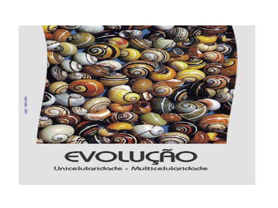 Vantagens da multicelularidade Grande diversidade de formas com adaptação a diferentes ambientes.