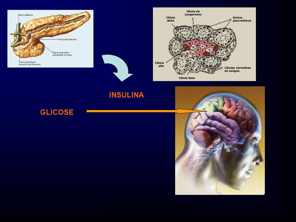 GLICOSE INSULINA Medicina 6º período / Setembro 2011
