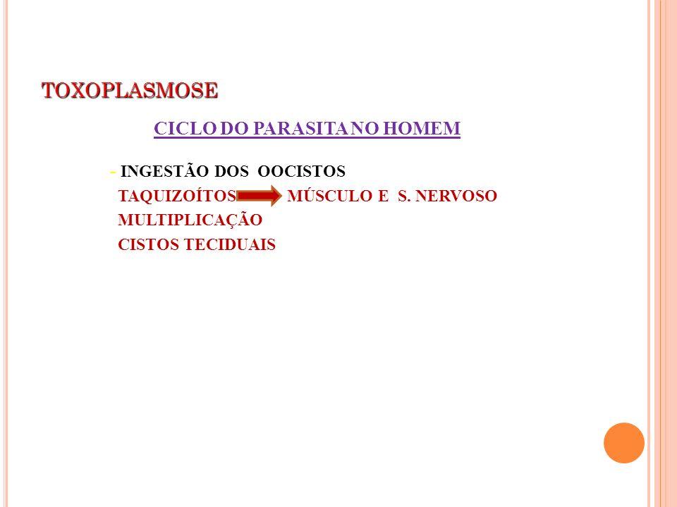 TOXOPLASMOSE - INGESTÃO DOS OOCISTOS TAQUIZOÍTOS MÚSCULO E S. NERVOSO MULTIPLICAÇÃO CISTOS TECIDUAIS CICLO DO PARASITA NO HOMEM