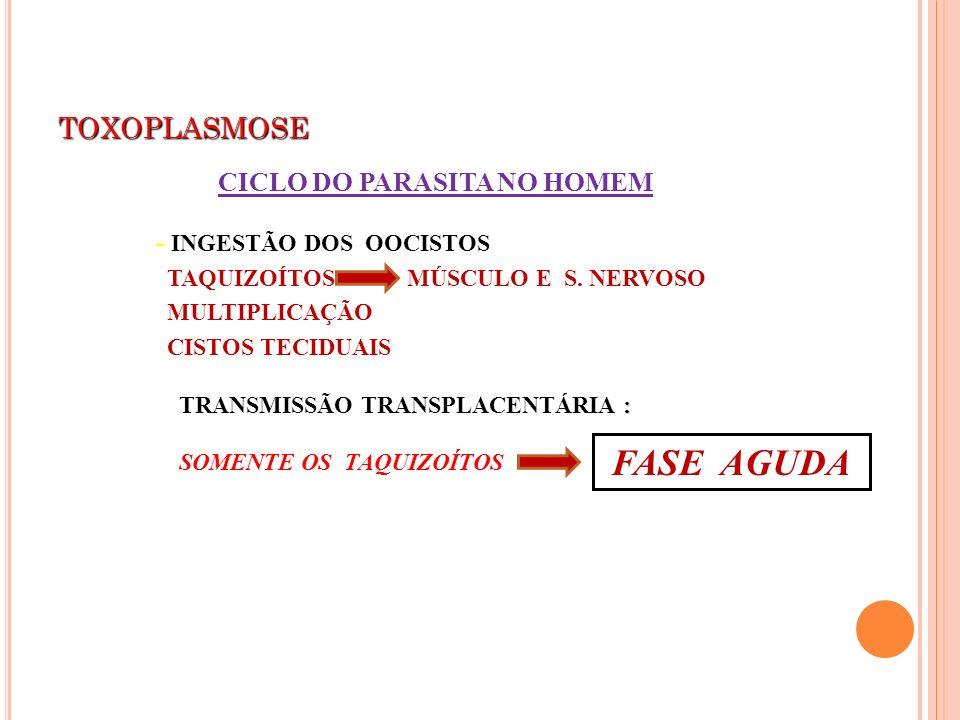 TOXOPLASMOSE - INGESTÃO DOS OOCISTOS TAQUIZOÍTOS MÚSCULO E S. NERVOSO MULTIPLICAÇÃO CISTOS TECIDUAIS CICLO DO PARASITA NO HOMEM : TRANSMISSÃO TRANSPLA
