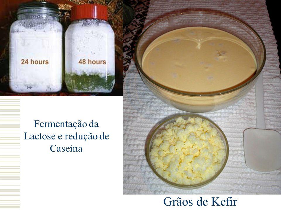 Fermentação da Lactose e redução de Caseína Grãos de Kefir