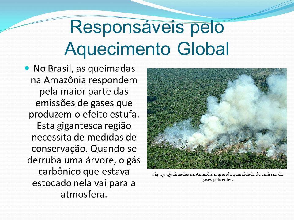 Responsáveis pelo Aquecimento Global No Brasil, as queimadas na Amazônia respondem pela maior parte das emissões de gases que produzem o efeito estufa.