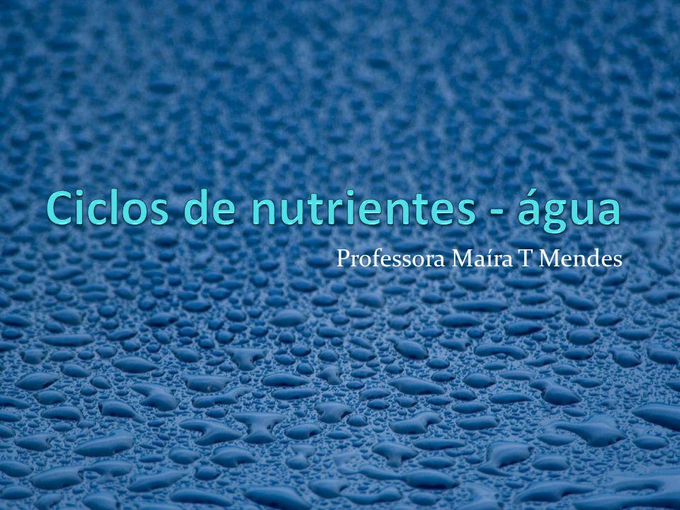 Professora Maíra T Mendes