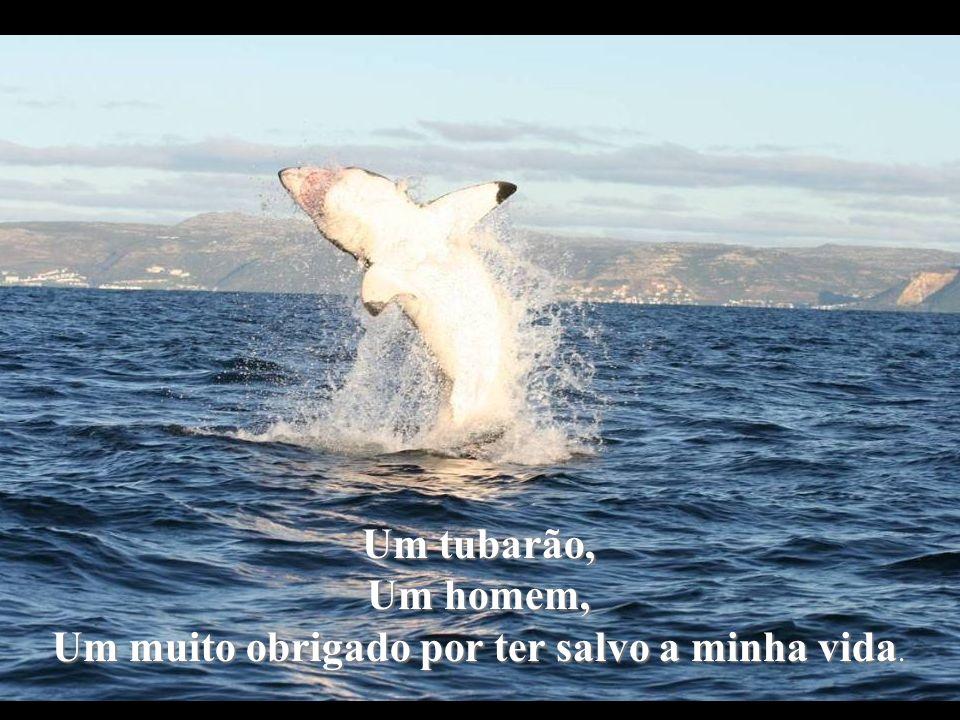 Um tubarão, Um homem, Um muito obrigado por ter salvo a minha vida.