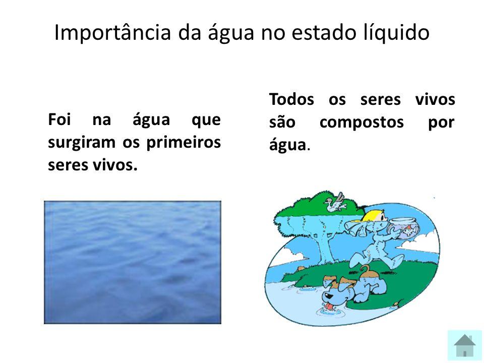 Importância da água no estado líquido Foi na água que surgiram os primeiros seres vivos.