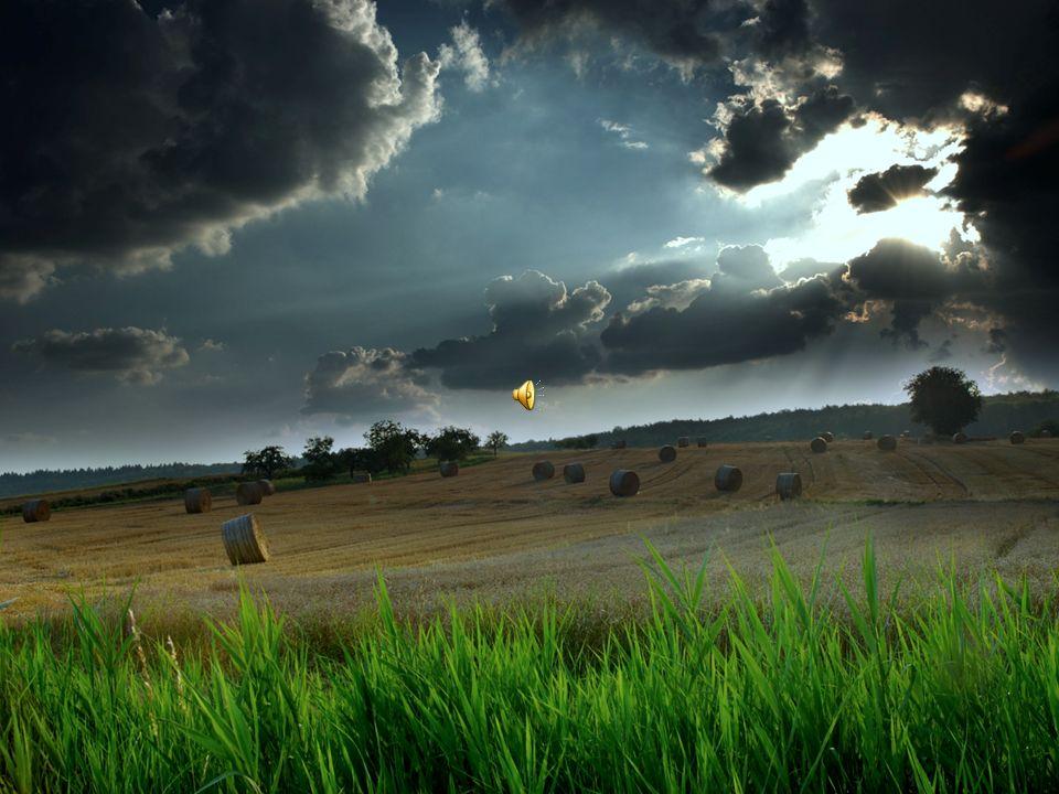 Direito Ambiental Consagração Internacional