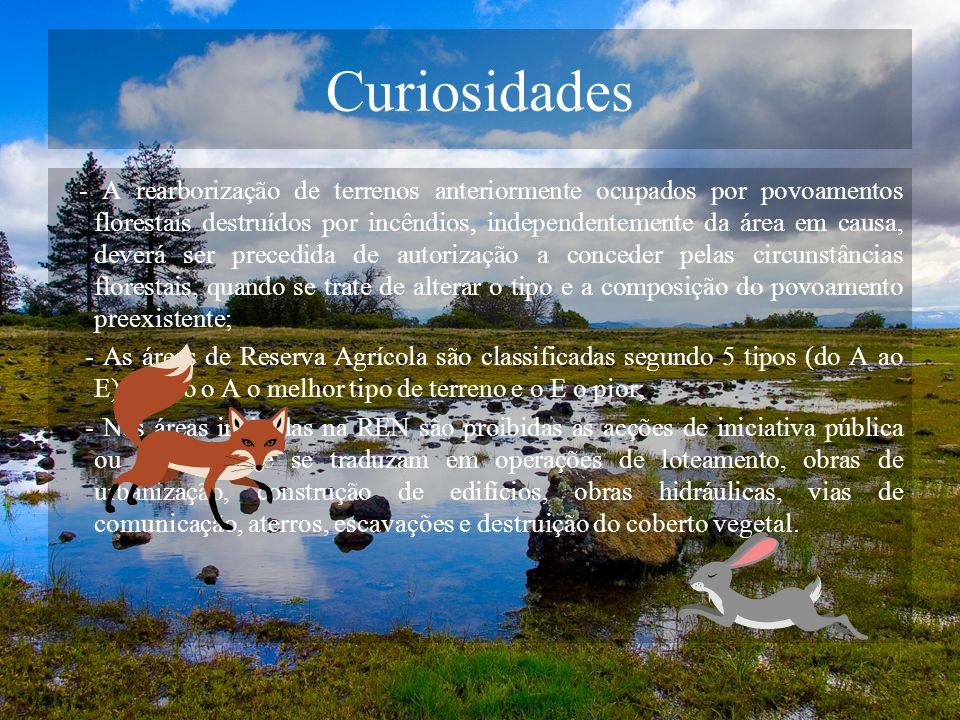 Curiosidades - A rearborização de terrenos anteriormente ocupados por povoamentos florestais destruídos por incêndios, independentemente da área em ca