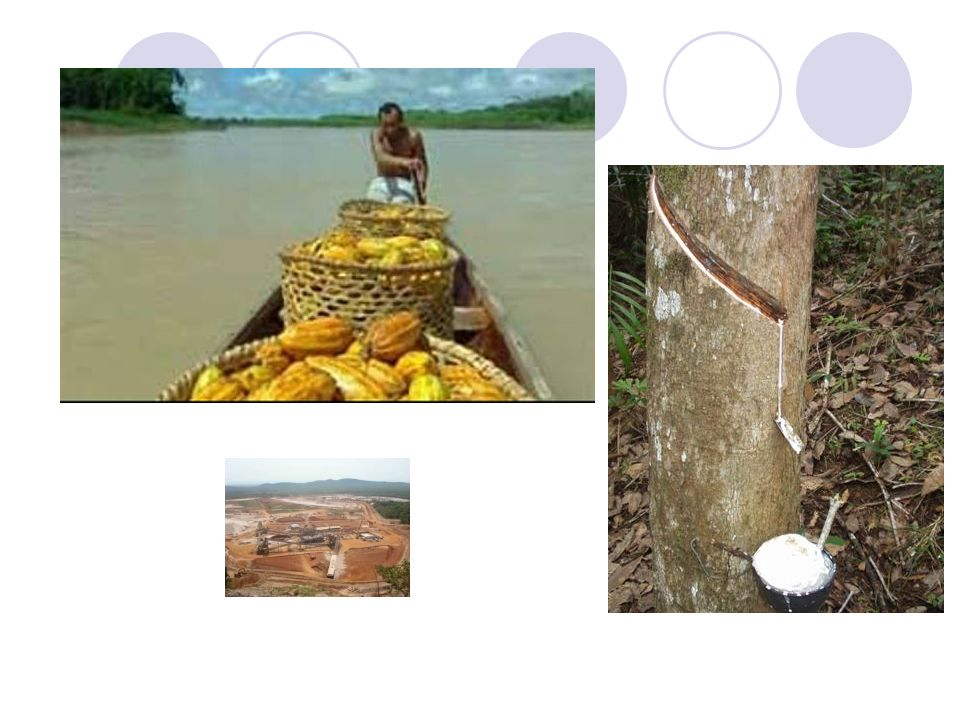 ECONOMIA DA AMAZÔNIA Predomina o setor extrativista: madeira, açaí, cacau, látex, minérios, etc. Em Manaus(AM) temos uma área com desenvolvimento indu