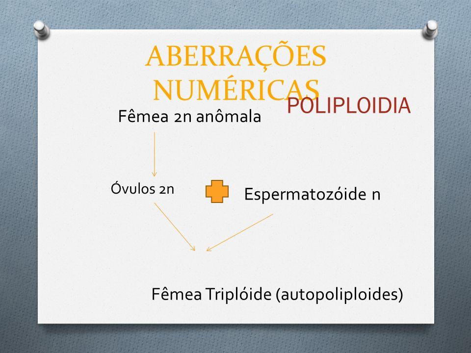 ABERRAÇÕES NUMÉRICAS POLIPLOIDIA Fêmea 2n anômala Óvulos 2n Espermatozóide n Fêmea Triplóide (autopoliploides)