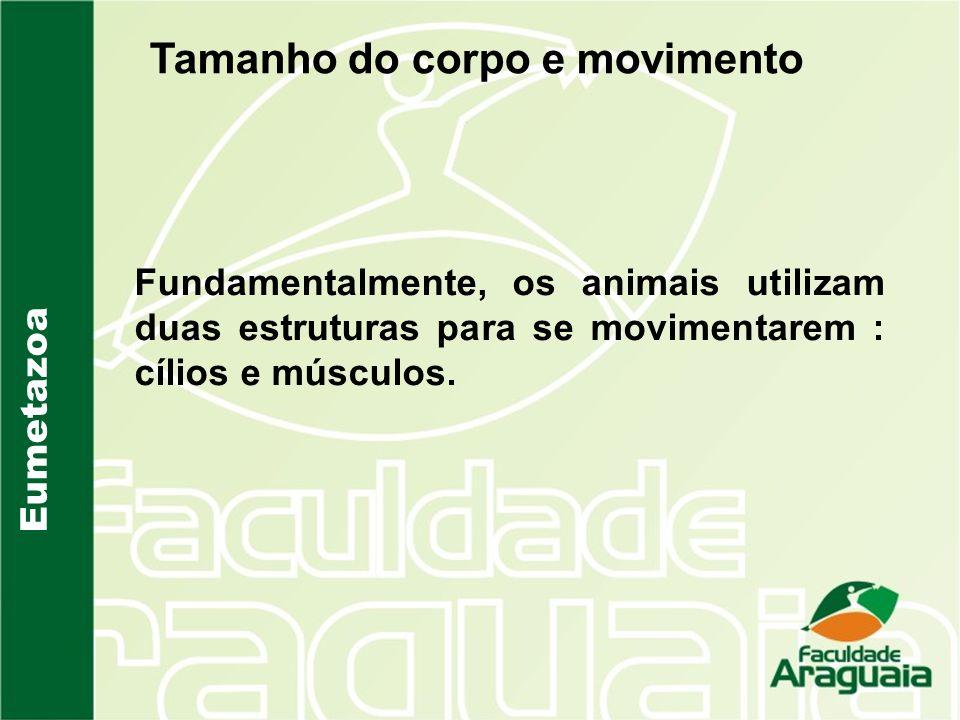 Tamanho do corpo e movimento Fundamentalmente, os animais utilizam duas estruturas para se movimentarem : cílios e músculos.
