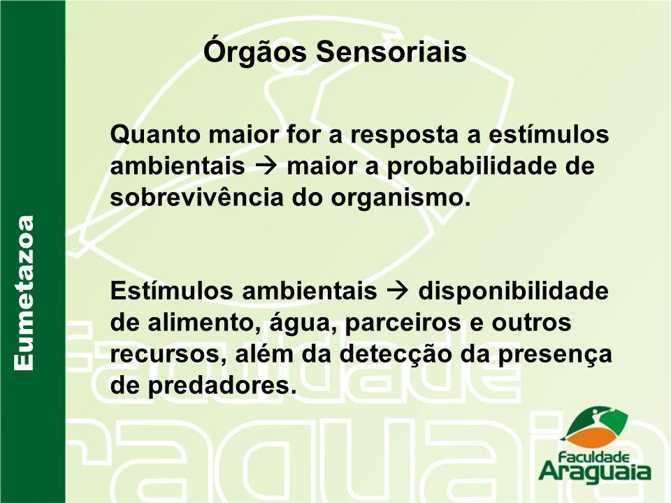 Eumetazoa Órgãos Sensoriais Quanto maior for a resposta a estímulos ambientais maior a probabilidade de sobrevivência do organismo. Estímulos ambienta
