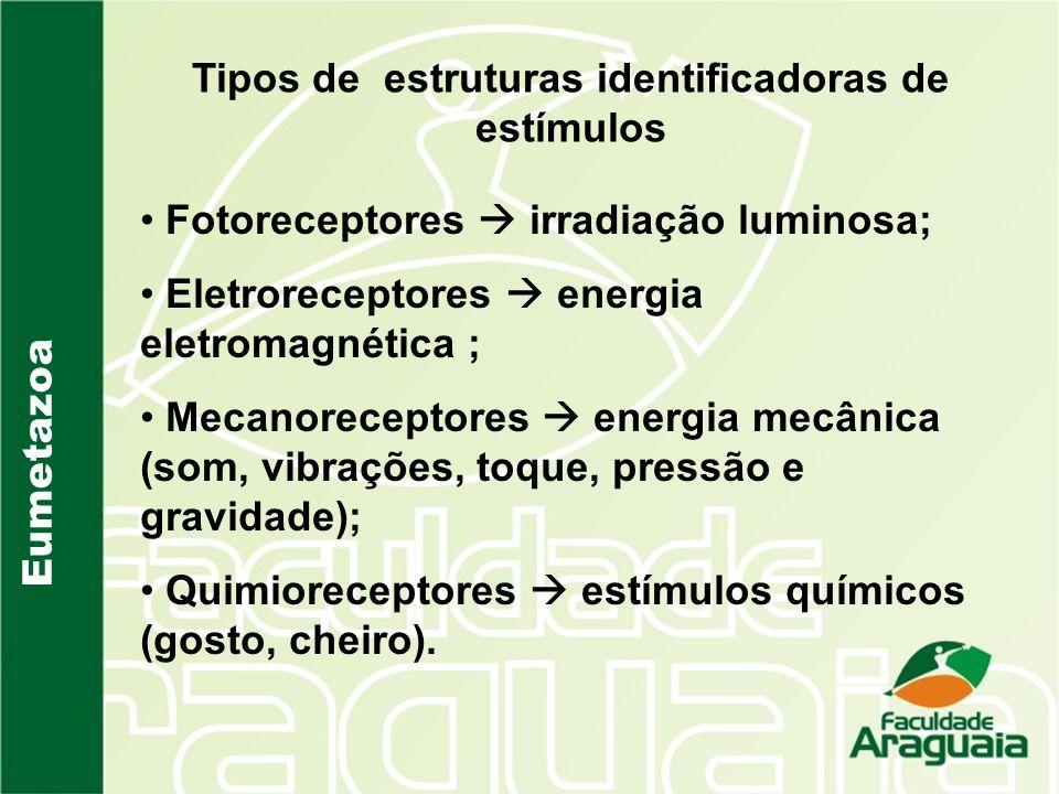 Tipos de estruturas identificadoras de estímulos Eumetazoa Fotoreceptores irradiação luminosa; Eletroreceptores energia eletromagnética ; Mecanorecept