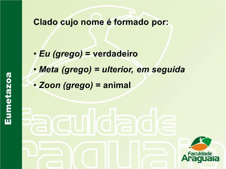 Eumetazoa Clado cujo nome é formado por: Eu (grego) = verdadeiro Meta (grego) = ulterior, em seguida Zoon (grego) = animal