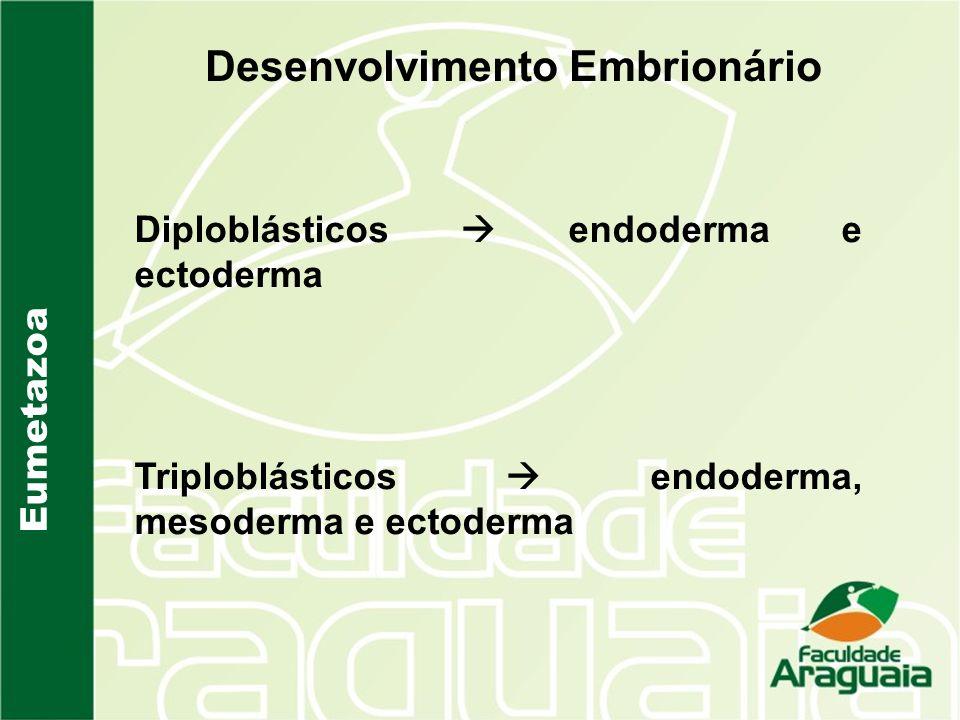 Eumetazoa Desenvolvimento Embrionário Diploblásticos endoderma e ectoderma Triploblásticos endoderma, mesoderma e ectoderma
