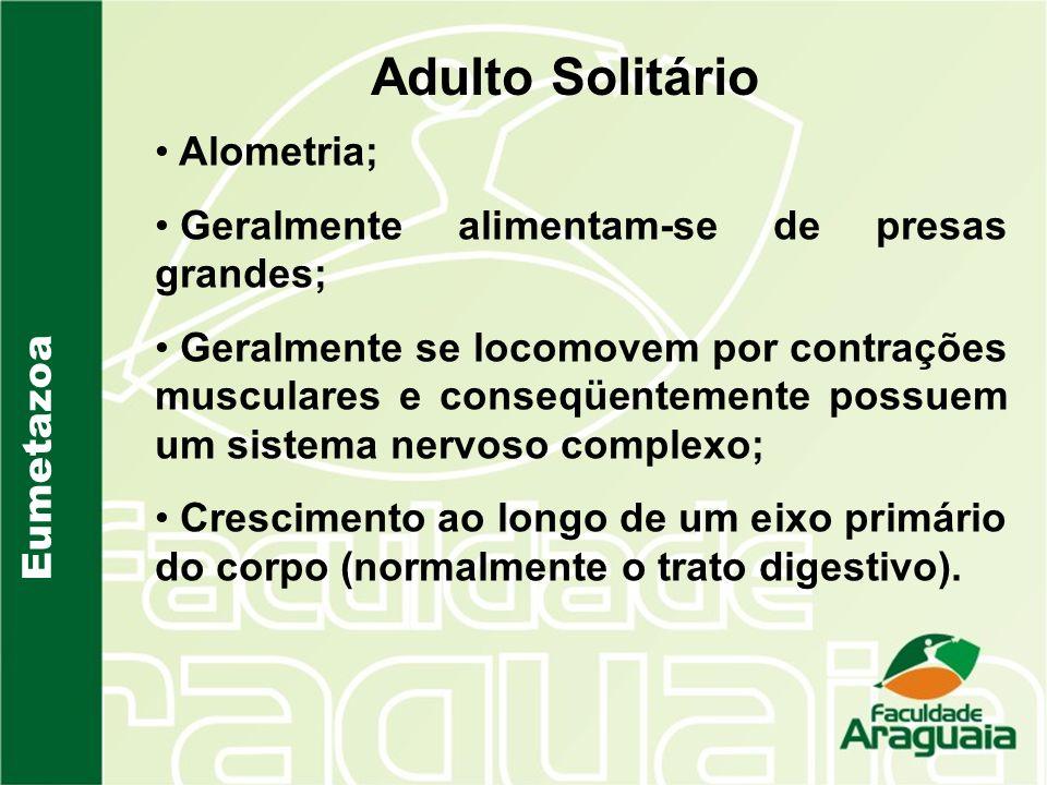 Adulto Solitário Eumetazoa Alometria; Geralmente alimentam-se de presas grandes; Geralmente se locomovem por contrações musculares e conseqüentemente