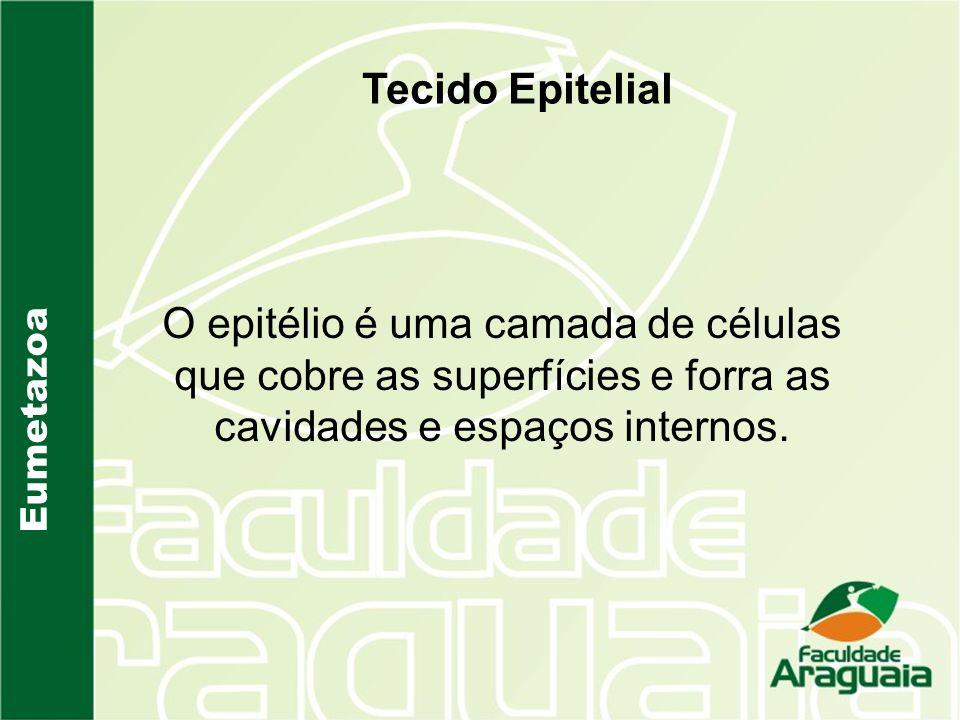 Eumetazoa Tecido Epitelial O epitélio é uma camada de células que cobre as superfícies e forra as cavidades e espaços internos.