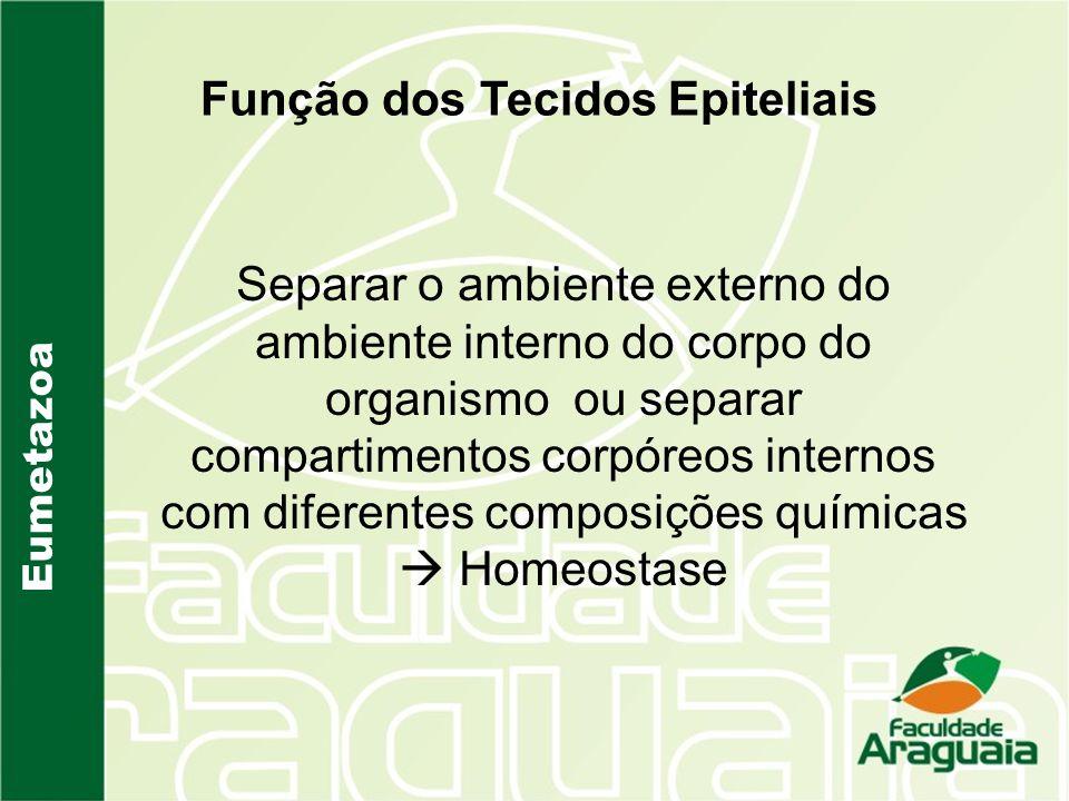 Eumetazoa Função dos Tecidos Epiteliais Separar o ambiente externo do ambiente interno do corpo do organismo ou separar compartimentos corpóreos inter