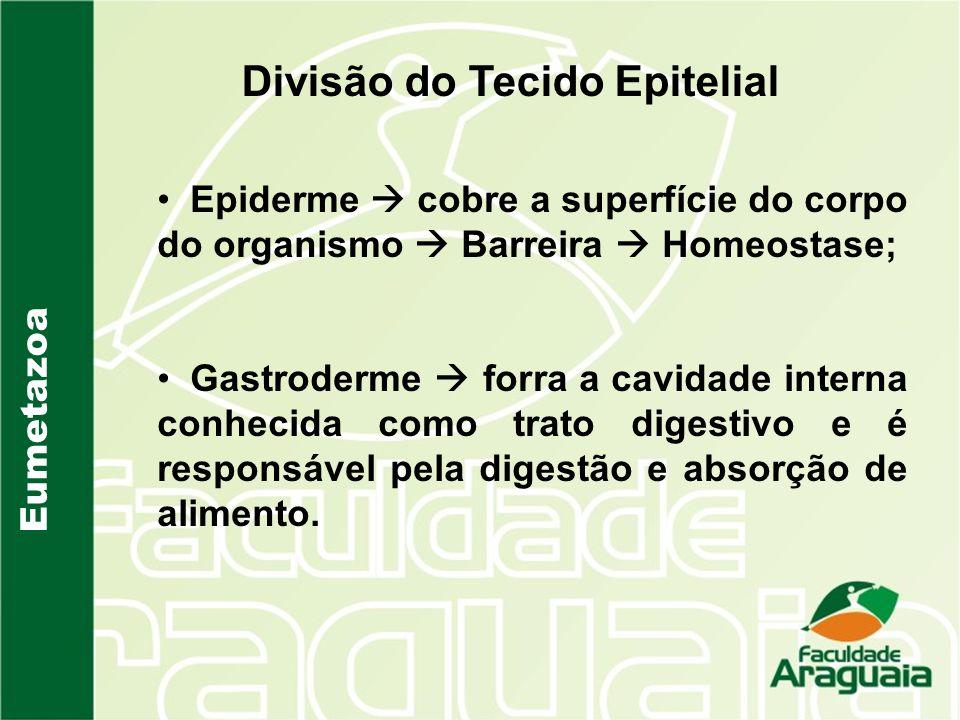 Eumetazoa Divisão do Tecido Epitelial Epiderme cobre a superfície do corpo do organismo Barreira Homeostase; Gastroderme forra a cavidade interna conh