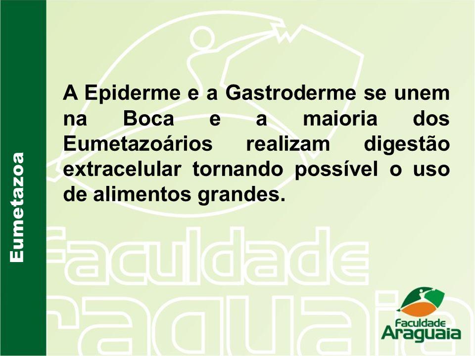 A Epiderme e a Gastroderme se unem na Boca e a maioria dos Eumetazoários realizam digestão extracelular tornando possível o uso de alimentos grandes.