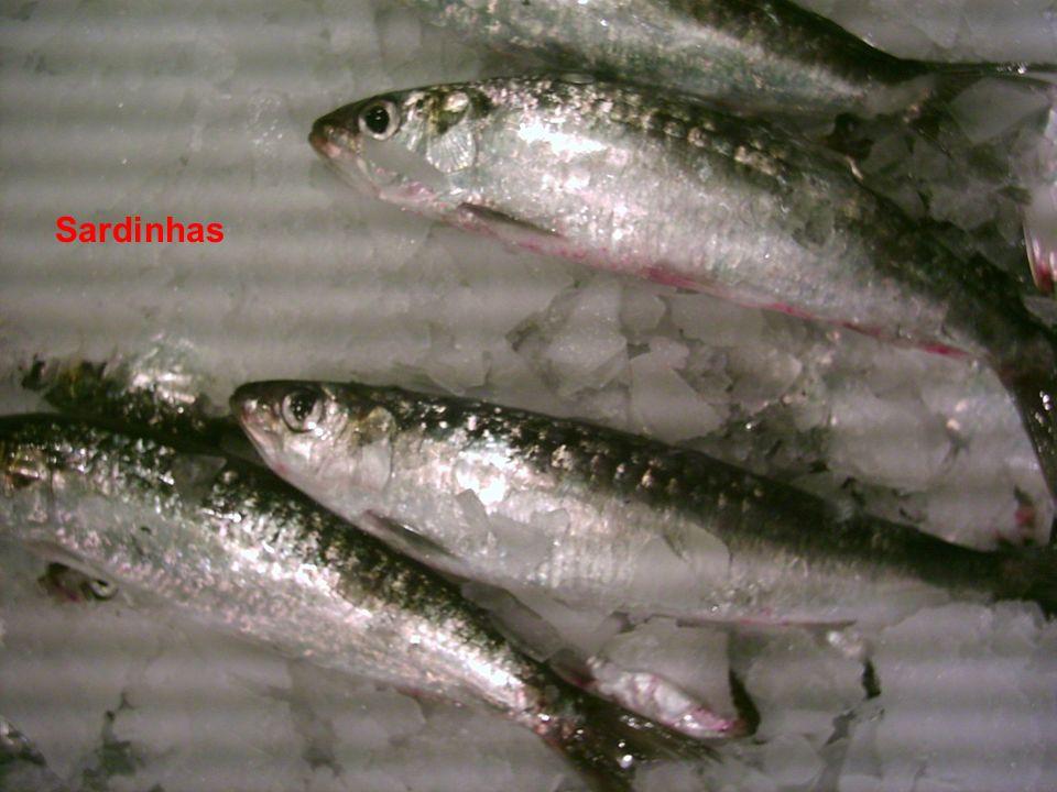 Actinopterygii Sardinhas