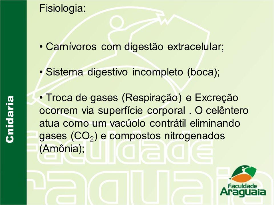 Cnidaria Fisiologia: Carnívoros com digestão extracelular; Sistema digestivo incompleto (boca); Troca de gases (Respiração) e Excreção ocorrem via superfície corporal.