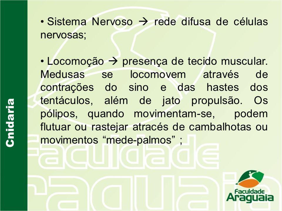 Cnidaria Sistema Nervoso rede difusa de células nervosas; Locomoção presença de tecido muscular.