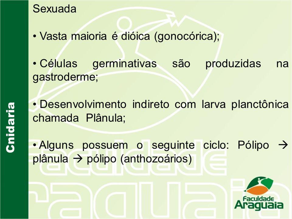 Cnidaria Sexuada Vasta maioria é dióica (gonocórica); Células germinativas são produzidas na gastroderme; Desenvolvimento indireto com larva planctônica chamada Plânula; Alguns possuem o seguinte ciclo: Pólipo plânula pólipo (anthozoários)