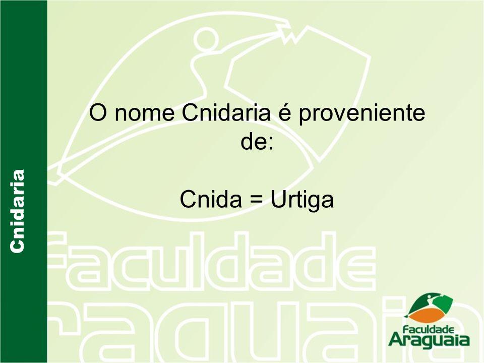 O nome Cnidaria é proveniente de: Cnida = Urtiga