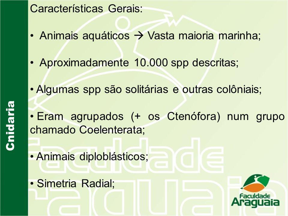 Cnidaria Características Gerais: Animais aquáticos Vasta maioria marinha; Aproximadamente 10.000 spp descritas; Algumas spp são solitárias e outras colôniais; Eram agrupados (+ os Ctenófora) num grupo chamado Coelenterata; Animais diploblásticos; Simetria Radial;