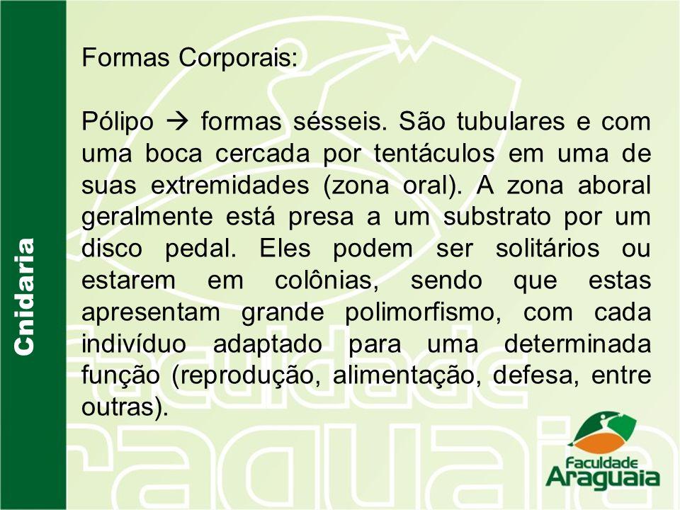 Cnidaria Formas Corporais: Pólipo formas sésseis.