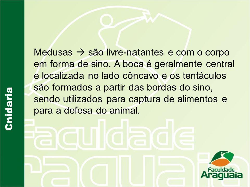 Cnidaria Medusas são livre-natantes e com o corpo em forma de sino.