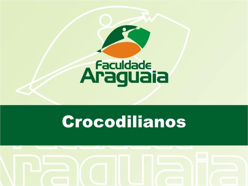 O nome Crocodylia é derivado do grego Krokodeilos que significa verme do seixo uma alusão ao formato do corpo destes animais e do ambiente em que vivem.