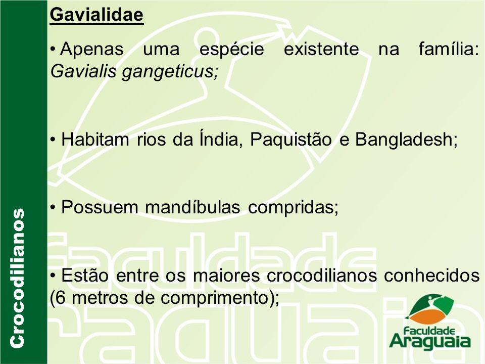 Crocodilianos Gavialidae Apenas uma espécie existente na família: Gavialis gangeticus; Habitam rios da Índia, Paquistão e Bangladesh; Possuem mandíbul