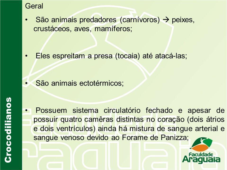 Crocodilianos Geral São animais predadores (carnívoros) peixes, crustáceos, aves, mamíferos; Eles espreitam a presa (tocaia) até atacá-las; São animai