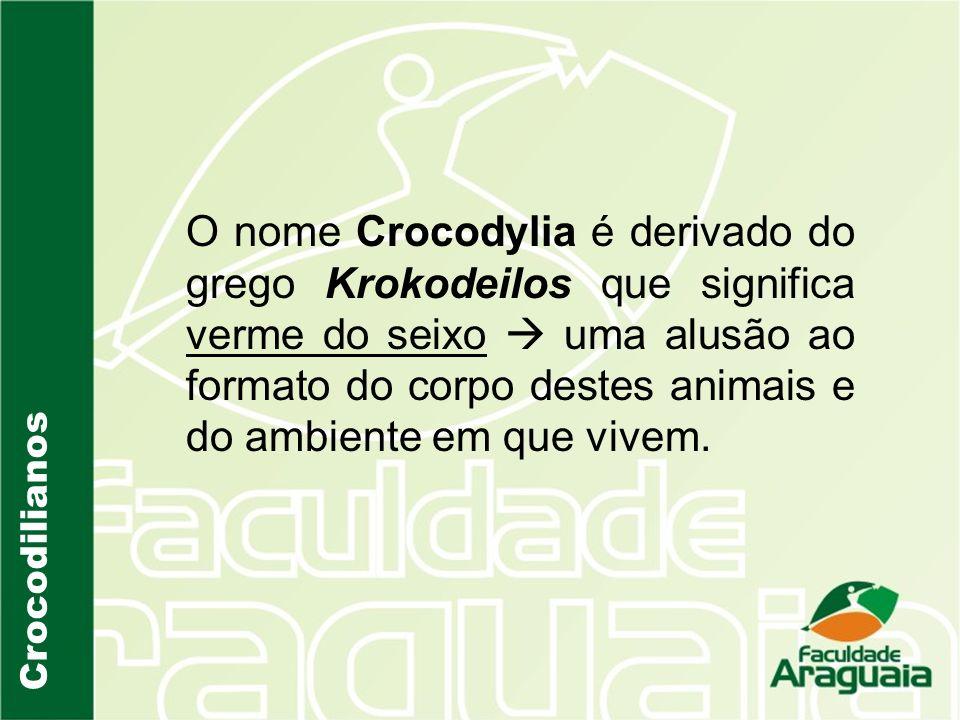 O nome Crocodylia é derivado do grego Krokodeilos que significa verme do seixo uma alusão ao formato do corpo destes animais e do ambiente em que vive
