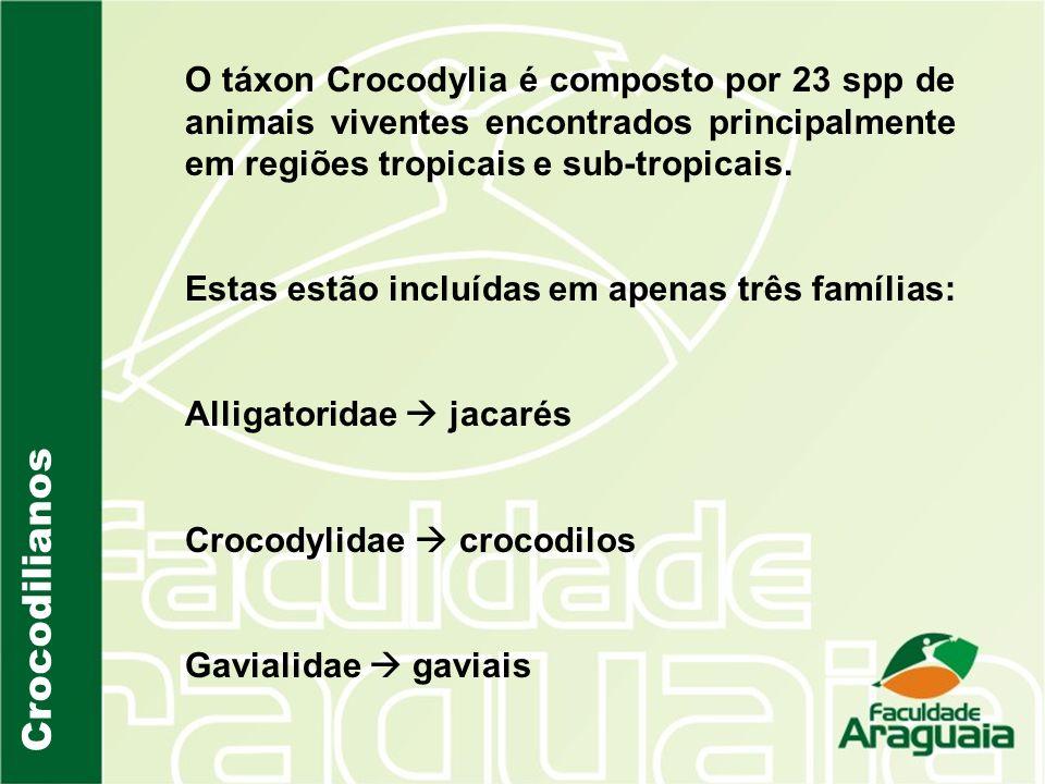 Crocodilianos Alligatoridae Com exceção do aligátor chinês, o grupo é formado por animais exclusivos do Novo mundo (Américas); São formas dulcícolas; Possuem focinhos mais curtos e largos do que os outros organismo das outras famílias.