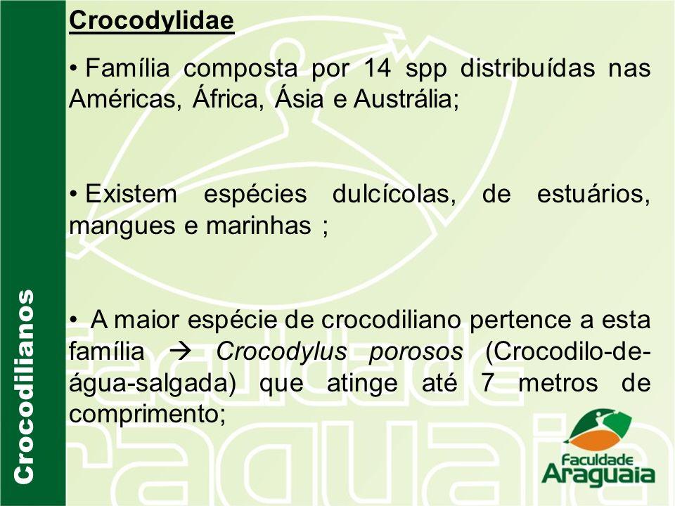 Crocodilianos Crocodylidae Família composta por 14 spp distribuídas nas Américas, África, Ásia e Austrália; Existem espécies dulcícolas, de estuários,
