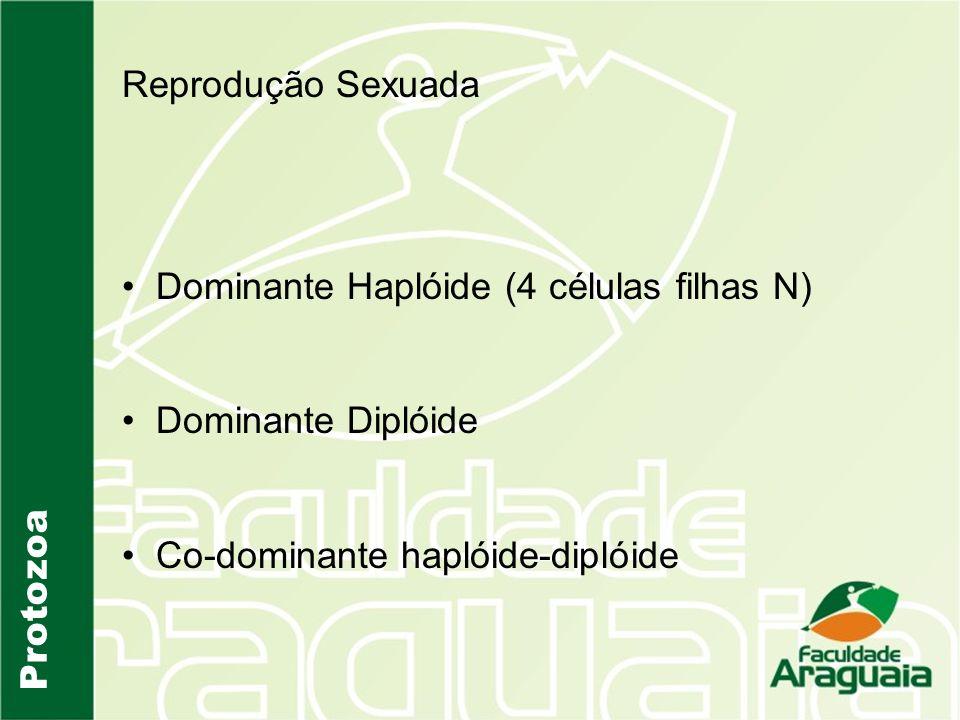 Protozoa Reprodução Sexuada Dominante Haplóide (4 células filhas N) Dominante Diplóide Co-dominante haplóide-diplóide