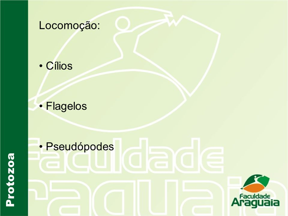 Locomoção: Cílios Flagelos Pseudópodes Protozoa