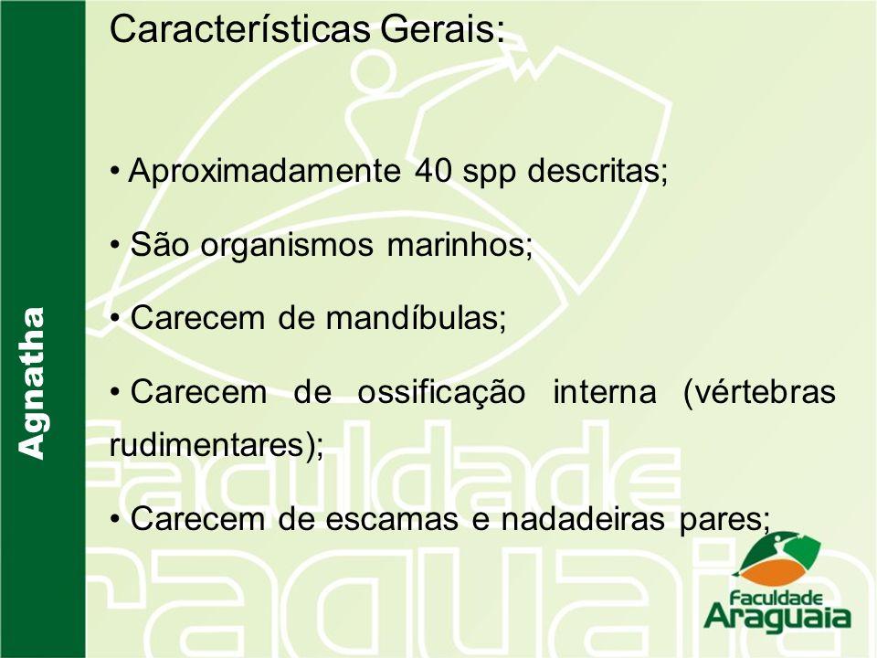 Agnatha Características Gerais: Aproximadamente 40 spp descritas; São organismos marinhos; Carecem de mandíbulas; Carecem de ossificação interna (vért