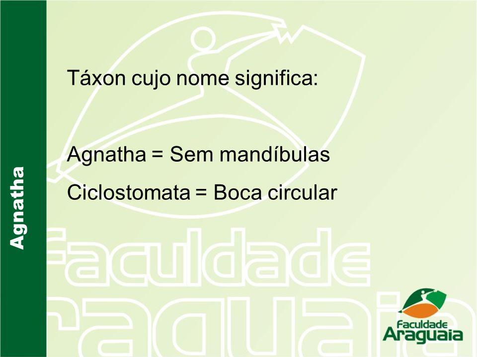 Táxon cujo nome significa: Agnatha = Sem mandíbulas Ciclostomata = Boca circular