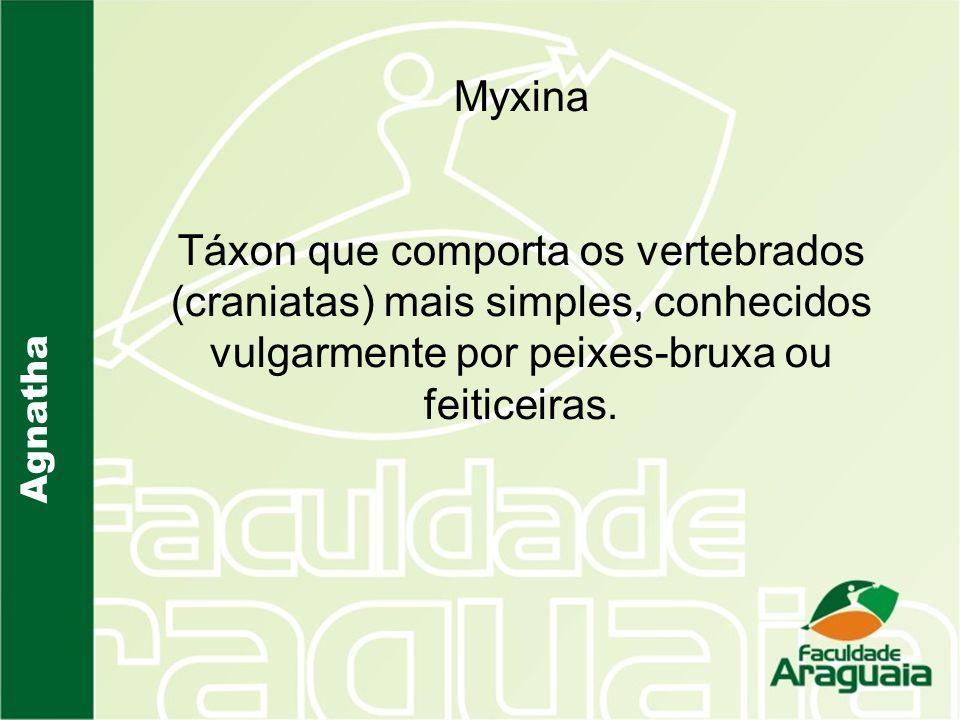 Agnatha Myxina Táxon que comporta os vertebrados (craniatas) mais simples, conhecidos vulgarmente por peixes-bruxa ou feiticeiras.